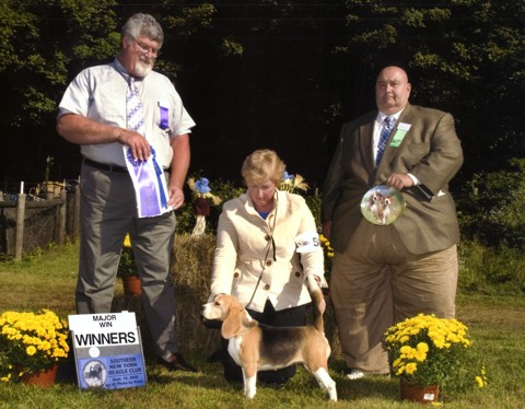 Carly winning Winners Female 15 inch at the Southern New York Beagle Specialty